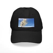 Soap Tree Yucca Baseball Hat