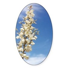 Soap Tree Yucca Oval Decal