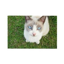 blue eyes Rectangle Magnet