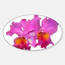 Pink Cattleya Oval Decal