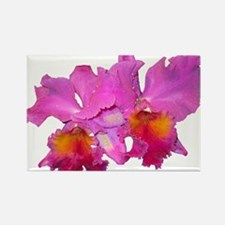Pink Cattleya Rectangle Magnet