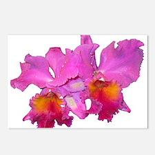 Pink Cattleya Postcards (Package of 8)