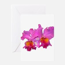Pink Cattleya Greeting Card
