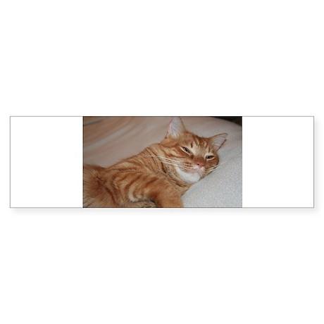 Cat Nap Bumper Sticker