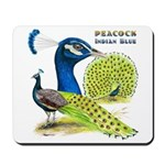 Peacock in Blue Mousepad