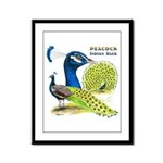 Peacock in Blue Framed Panel Print