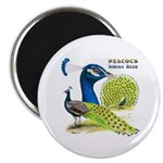 "Peacock in Blue 2.25"" Magnet (100 pack)"