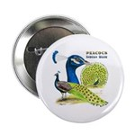"Peacock in Blue 2.25"" Button (100 pack)"