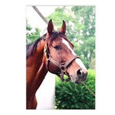 UNBRIDLED Postcards (Package of 8)