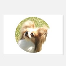Red Sable Papillon Postcards (Package of 8)