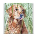 Tile Coaster Golden Retriever