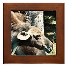 Young Moose Framed Tile