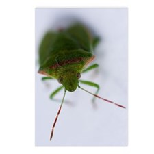 Stink Eye Postcards (Package of 8)