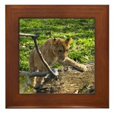 Lion Cub Climbing Framed Tile