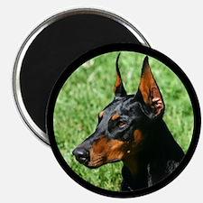 """Doberman Pinscher Dog 2.25"""" Magnet (100 pack)"""