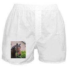 FUSAICHI PEGASUS Boxer Shorts