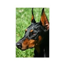 Doberman Pinscher Dog Rectangle Magnet