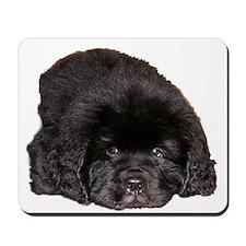 Newfoundland Puppy Dog Mousepad