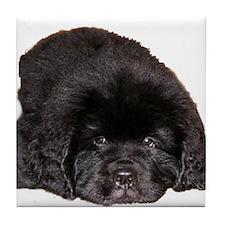 Newfoundland Puppy Dog Tile Coaster