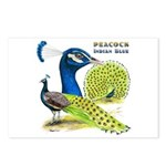 Peacock Indian Blue Postcards (Package of 8)