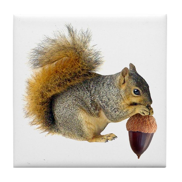 Squirrel Eating Acorn Tile Coaster By Catsclips