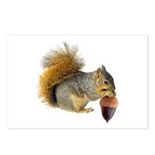 Squirrel Eating Acorn Postcards (Package of 8)