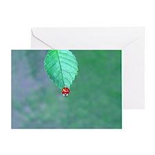 Red Ladybug on Leaf Edge Greeting Card