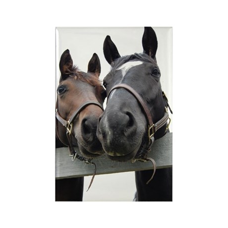 Kissing Horses Rectangle Magnet (100 pack)