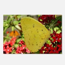 Dogface Butterfly Postcards (Package of 8)
