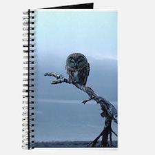 Snowy Saw-whet Owl Journal