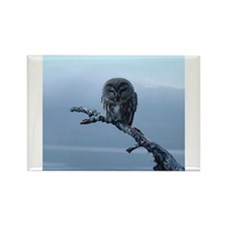 Snowy Saw-whet Owl Rectangle Magnet