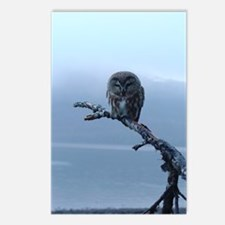Snowy Saw-whet Owl Postcards (Package of 8)