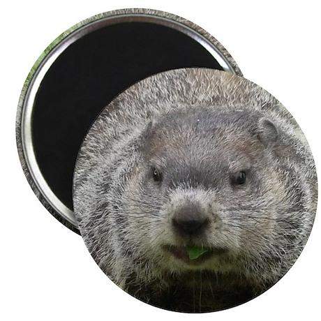 """Groundhog Eating 2.25"""" Magnet (10 pack)"""