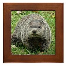 Groundhog Eating Framed Tile