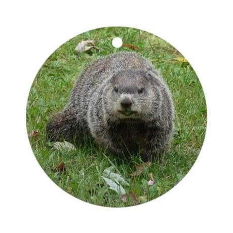Groundhog Eating Ornament (Round)