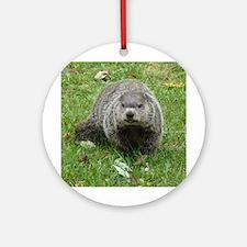 Groundhog Eating Ornament (Round)