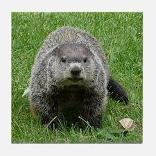 Groundhog (Woodchuck) Tile Coaster