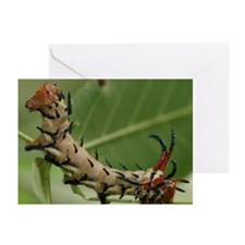 Hickory Horned Devil Greeting Cards (Pk of 10)