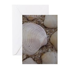 Shells Greeting Cards (Pk of 10)
