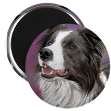 Pastel Painting of Border Collie Dog Magnet