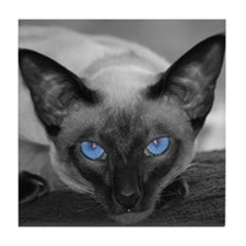 Siamese Cat B&W Photo Art Tile Coaster