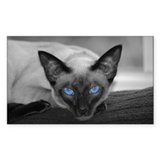 Siamese Cat B&W Photo Art Rectangle Decal