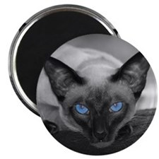 Siamese Cat B&W Photo Art Magnet