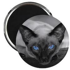 Siamese Cat B&W Photo Art Magnet