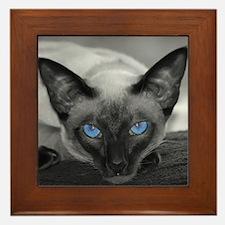 Siamese Cat B&W Photo Art Framed Tile