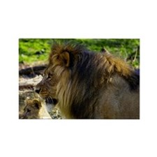 Male Lion Left Rectangle Magnet