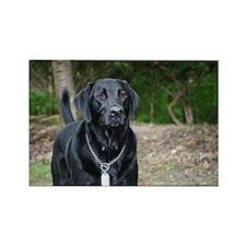 Gage - Black Labrador - Photo Rectangle Magnet