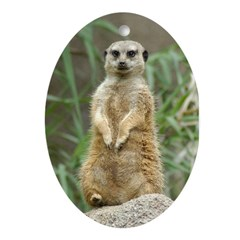 Ornament Oval Meerkat