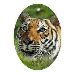 Ornaments Oval DPZ Tiger 3