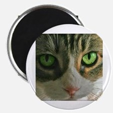 Kitty Eyes Magnet